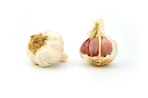 pěstování česneku pro začátečníky