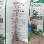 Hnojení česneku